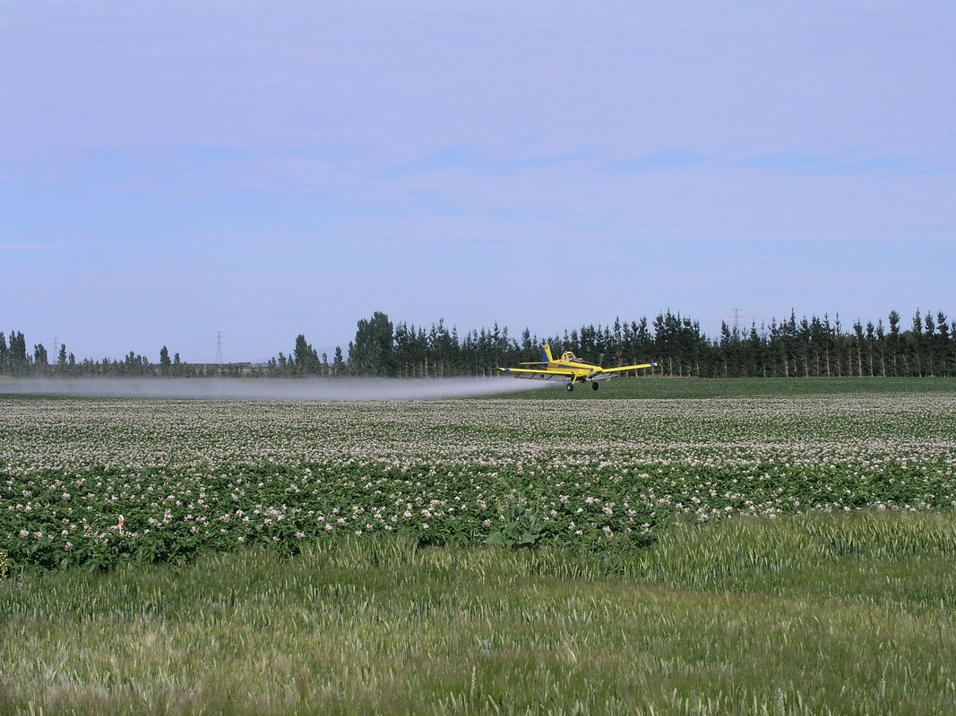 Our contracted aerial sprayer applying fungicides
